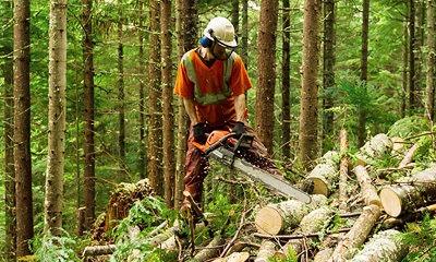 Digitalisierte Lieferprozesse in der Forstwirtschaft